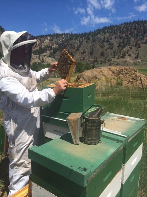 steves-bees