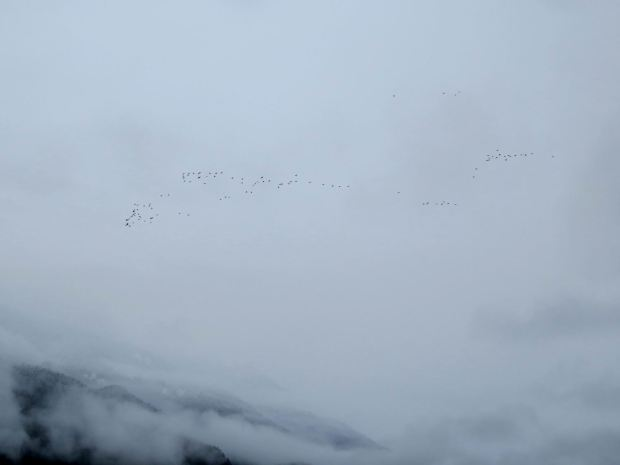fall-birds-049