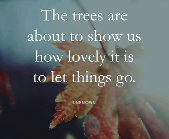 the trees show us about letting go